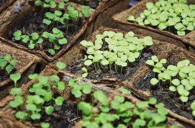 Semi per orto: quando è il periodo migliore nell'anno per comprarli o scambiarli?