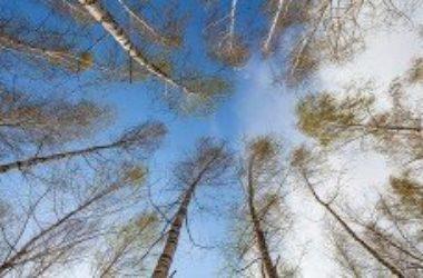 Alberi e clima: crescono più velocemente per il global warming
