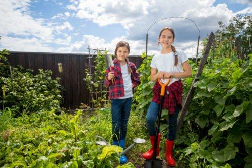 Proteggere un orto urbano dallo smog