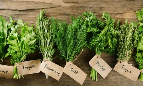 Come essiccare le erbe aromatiche - Tuttogreen