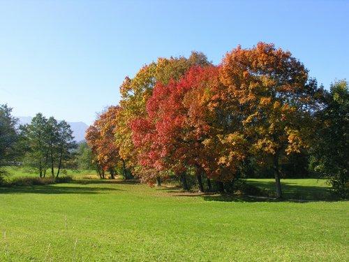 Photo of Come mantenere il prato in autunno: 3 consigli utili