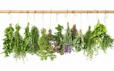 Scopriamo come conservare le erbe aromatiche con la guida pratica