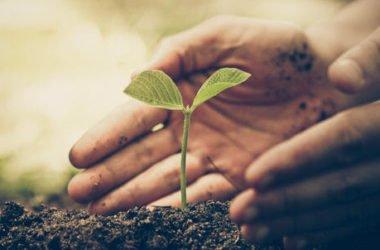 Agricoltura sostenibile in Italia i contadini adottano pratiche sempre più green