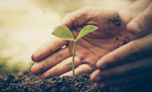 Photo of Agricoltura sostenibile in Italia i contadini adottano pratiche sempre più green