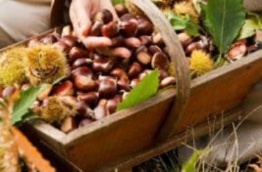 Come raccogliere le castagne in maniera sostenibile