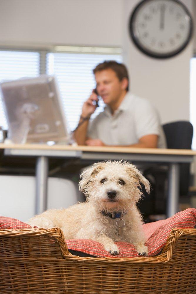 Photo of Portati il cane in ufficio e lavorerai meglio!