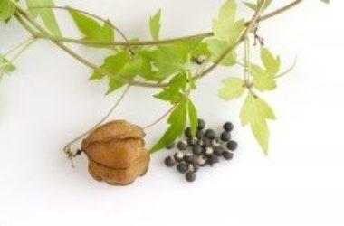 Cortisone naturale: tutte le alternative naturali