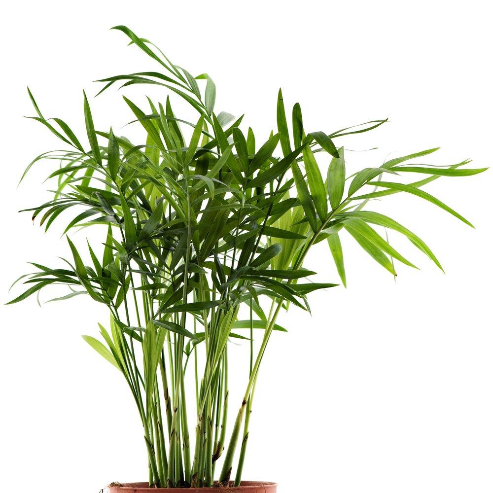 6 piante che richiedono poca luce tuttogreen - Piante verdi interno ...