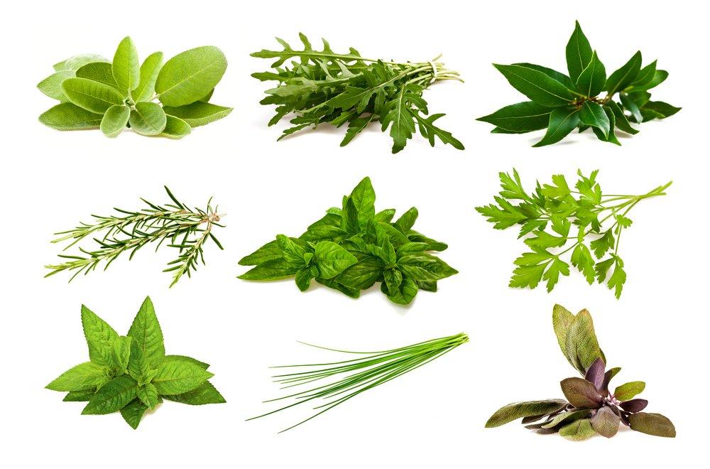 Photo of Scopriamo come conservare le erbe aromatiche con la guida pratica