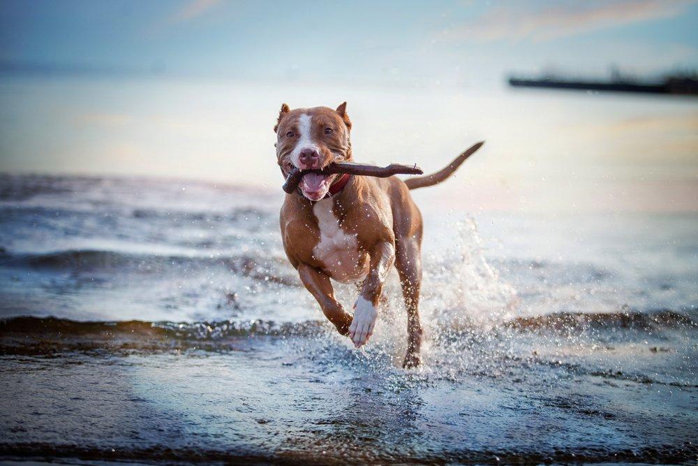 Photo of Come educare un cane: ecco le cose che un padrone non dovrebbe mai dire!