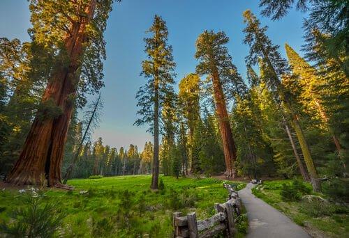 piante secolari delle foreste del Parco Nazionale di Redwood