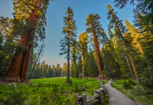 Photo of Le piante secolari delle foreste del Parco Nazionale di Redwood, California
