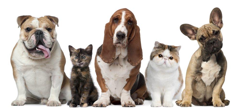 Photo of Conosci l'impronta ecologica di cani e gatti?