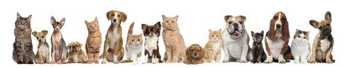 Photo of Come curare gli animali domestici in maniera sostenibile