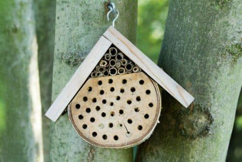 allevare api in città