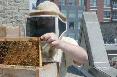 Come allevare api in città è più facile di quel che sembra…