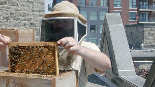 Photo of Come allevare api in città è più facile di quel che sembra…