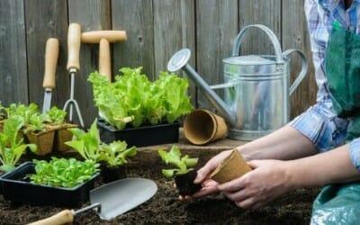 Come fare i semi di lattuga: la guida pratica