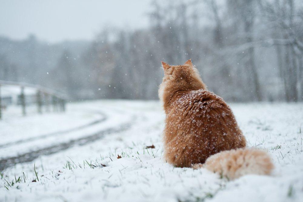 Photo of Come proteggere gli animali dal freddo (domestici e non)