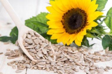 Tutte le proprietà dei semi di girasole e le migliori ricette da preparare in casa