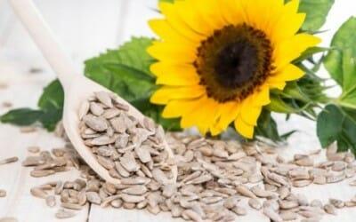 Andiamo alla scoperta delle proprietà dei semi di girasole con tante ricette da provare