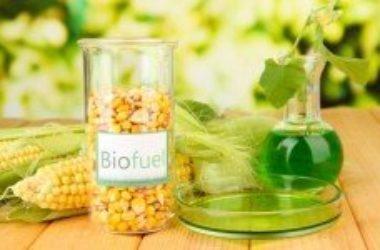 Agricoltura e bioenergia: la produzione di biocarburanti non è sostenibile e toglie terra fertile