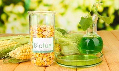 Photo of Agricoltura e bioenergia: la produzione di biocarburanti non è sostenibile e toglie terra fertile