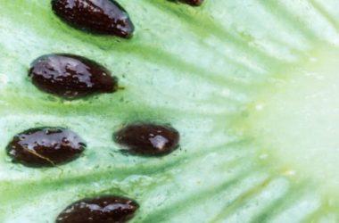 Guida alle proprietà del kiwi e utilizzi in cucina e cosmesi