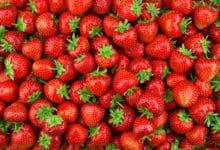 Photo of Scopriamo tutte le proprietà ed i benefici per la salute delle fragole