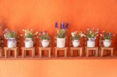 Le piante da balcone: le varietà più adatte