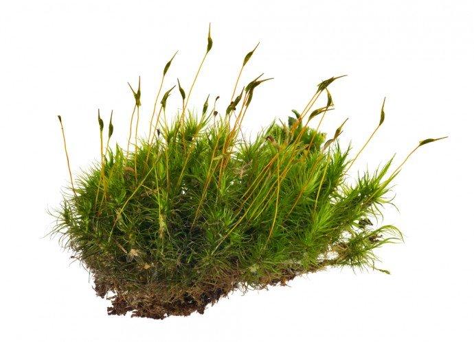 Tutto sul terriccio per piante da giardino: lo sfagno
