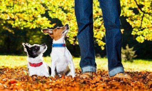 Photo of Perché i cani capiscono cosa diciamo