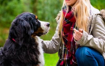 Bestiacce, la start up green per trovare il cane ideale
