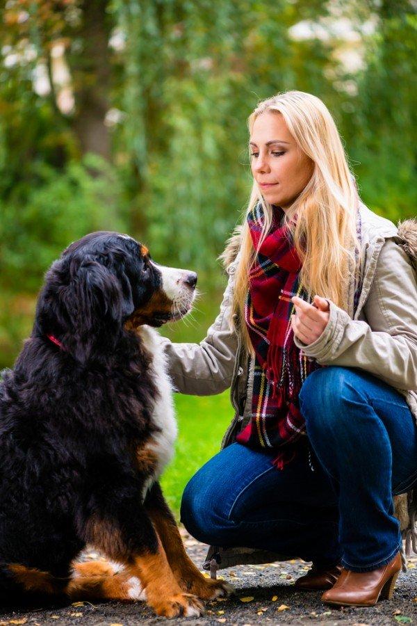 Perché i cani capiscono cosa diciamo