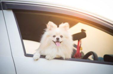 Guida alle vacanze con il cane, cosa vi serve per portare con voi il vostro amico a quattrozampe
