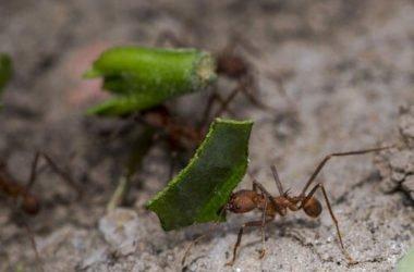 Come eliminare le formiche in casa con metodi naturali