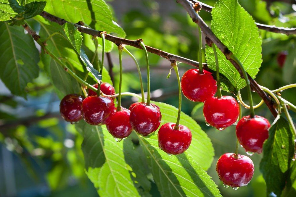 Come coltivare alberi da frutto in casa la guida pratica for Albero da frutto nano
