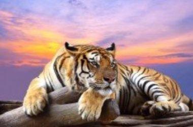 Ecco gli animali più belli a rischio di estinzione per il cambiamento climatico