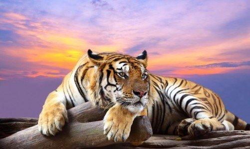 Photo of Ecco gli animali più belli a rischio di estinzione per il cambiamento climatico