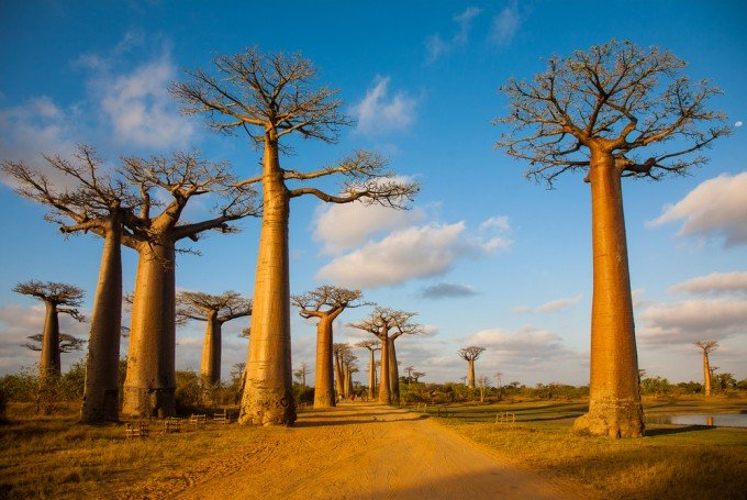 Baobab proprietà del nuovo superfood