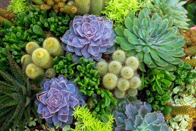 Piante grasse come curarle in modo facile e naturale for Tutte le piante grasse