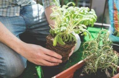 Le 5 piante più semplici da coltivare e gli strumenti per fare un orto sul balcone