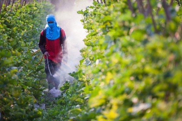 Photo of Pesticidi pericolosi per la salute: ecco il nuovo rapporto Greenpeace