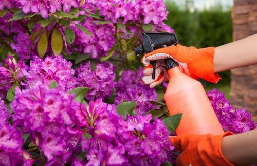 Come proteggere l'orto dagli insetti