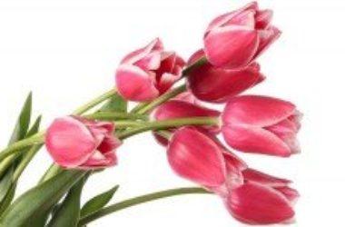 Significato dei fiori: un fiore per ogni emozione