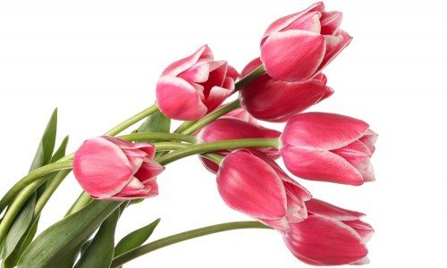 Photo of Significato dei fiori: un fiore per ogni emozione