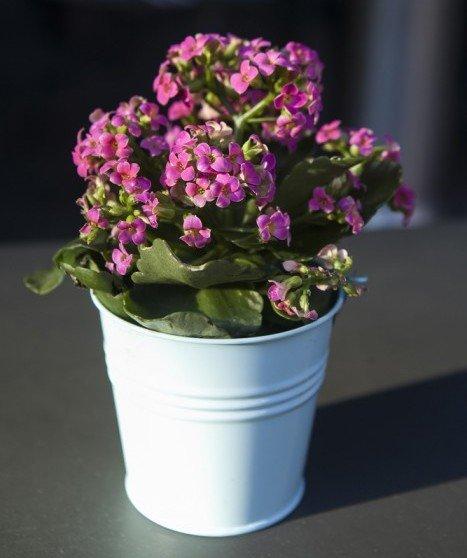 Piante grasse come curarle in modo facile e naturale for Vasi piante grasse