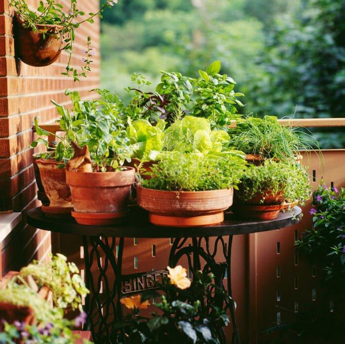 Come fare un orto sul terrazzo