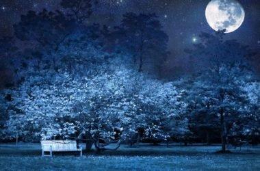 Moonlight garden: scopri cosa sono i giardini notturni