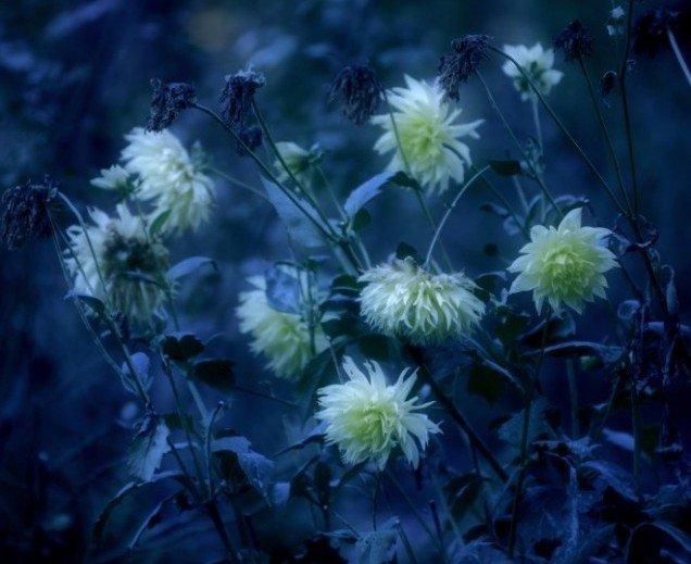 Moonlight garden scopri cosa sono i giardini notturni tuttogreen - Il giardino al chiaro di luna ...